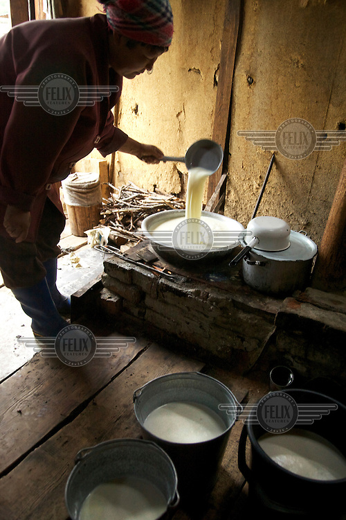 37 year old Tuvan woman Ina Natpiool makes cream from cow's milk at their summer camp in the Taiga (the biome of the needleleaf forest) near the village of Chodura.