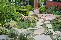 Stepping stone path with low growing groundcover herbs, thyme in garden border of edible plants, greens, vegetables, and flowers in Rosalind Creasy front yard garden