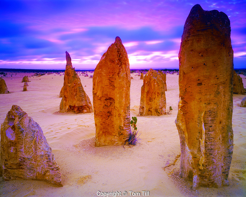 Sunset in the Pinnaacles Deser, Nambung National Park, Western Australia, Australia, Limestone pillars near Indian Ocean