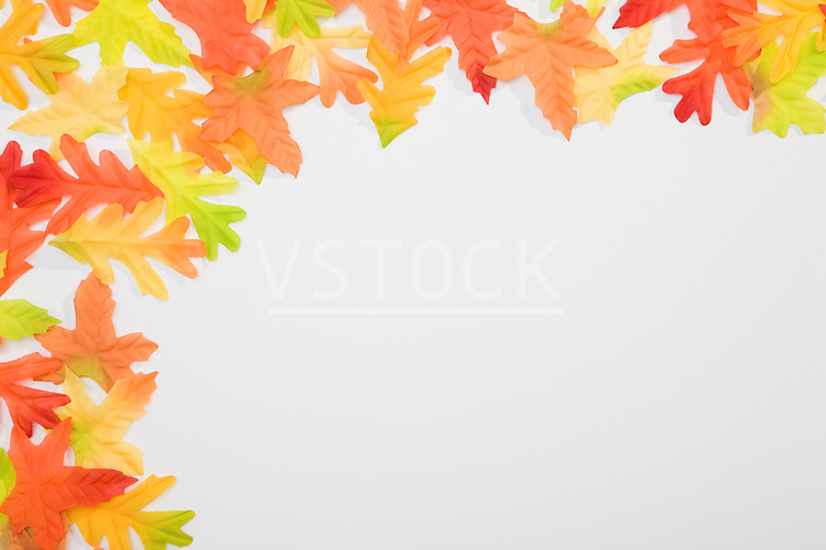 Autumn oak leaves against white background