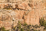 Ancestral Pueblan Native American ruins in Recapture Canyon.  These cliff dwellings were built somewhere between 700 AD and 1300 AD, at which time they were abandoned.  Southeastern Utah.