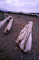 Driftwood near Cape Alava, Olympic National Park, Washington, US