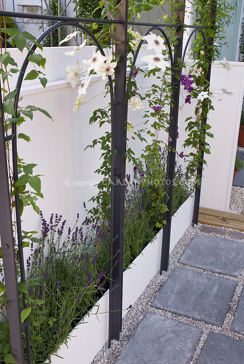 Good idea: raised bed behind trellis arch for climbing vine Clematis next to white wall and Lavandula herb lavender plants, flagstone patio