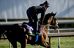 October 30, 2019: Breeders' Cup Mile entrant El Tormenta, trained by Gail Cox, exercises in preparation for the Breeders' Cup World Championships at Santa Anita Park in Arcadia, California on October 30, 2019. Carolyn Simancik/Eclipse Sportswire/Breeders' Cup/CSM