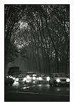 Traffic and trees, East Berlin, 18 November 1989. Photograph copyright Graham Harrison.