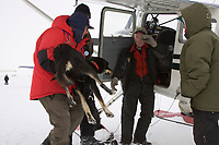 A veterinarian hands a dropped dog to pilot Tim Skala in Shaktoolik for a ride back to Unalakleet on Monday during Iditarod 2008