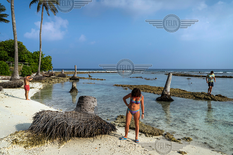 Tourist walk among palm trees uprooted by sand erosion on Bikini Beach, on the inhabited island of Guraidhoo.