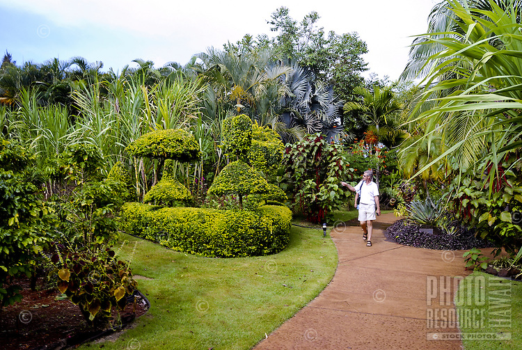 A man strolls along a path surrounded by the lush green gardens at the National Tropical Botanical Garden near Poipu, Kauai.
