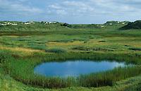 Dünentümpel, Tümpel, Gewässer zwischen den Dünen in einer Salzwiese, Salzwiesen auf Norderney, Nordsee