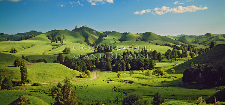 Farmland in the Manawatu/Whanganui Region. New Zealand.
