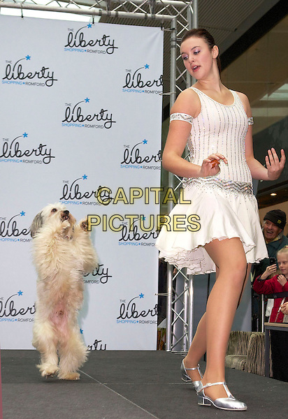 Ashleigh Butler and Pudsey .Ashleigh and Pudsey perform at Liberty Shopping Centre Romford, Essex and sign copies of Pudsey's autobiography. 'Pudsey: My Autobidography' at Waterstones in Romford, Essex, England, UK,.October 27th 2012..full length white dress dancing performing show  pet animal .CAP/CB/PP.©Cliff Bass/PP/Capital Pictures