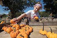 NWA Democrat-Gazette/J.T. WAMPLER Mara Servoss, 5, of Fayetteville puts pumpkins out for display Sunday Sept. 27, 2015 at Sequoyah United Methodist Church in Fayetteville. The congregation worked about two hours unloading several thousand pumpkins trucked in from Farmington New Mexico. The annual pumpkin sale benefits the church's youth ministries.