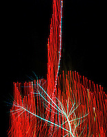 Lights in tree