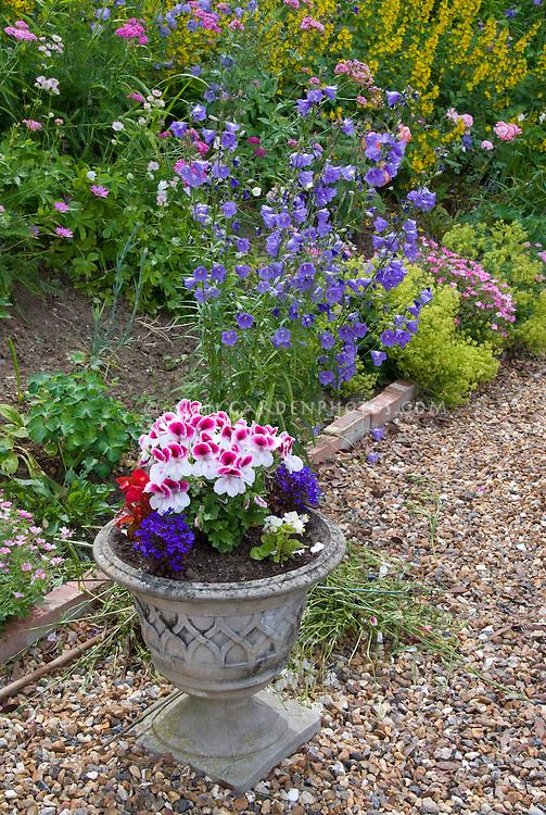Campanula persicifolia blue flowers, Lysimachia punctata, container pot urn of Pelargonium annual geraniums, Lobelia erinus, stone pebbles mulch