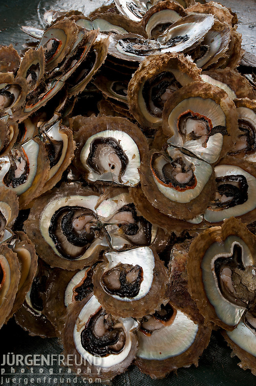 Once the pearls are taken out, the oyster is discarded. Meat is taken out and the shell is cleaned for individual use.
