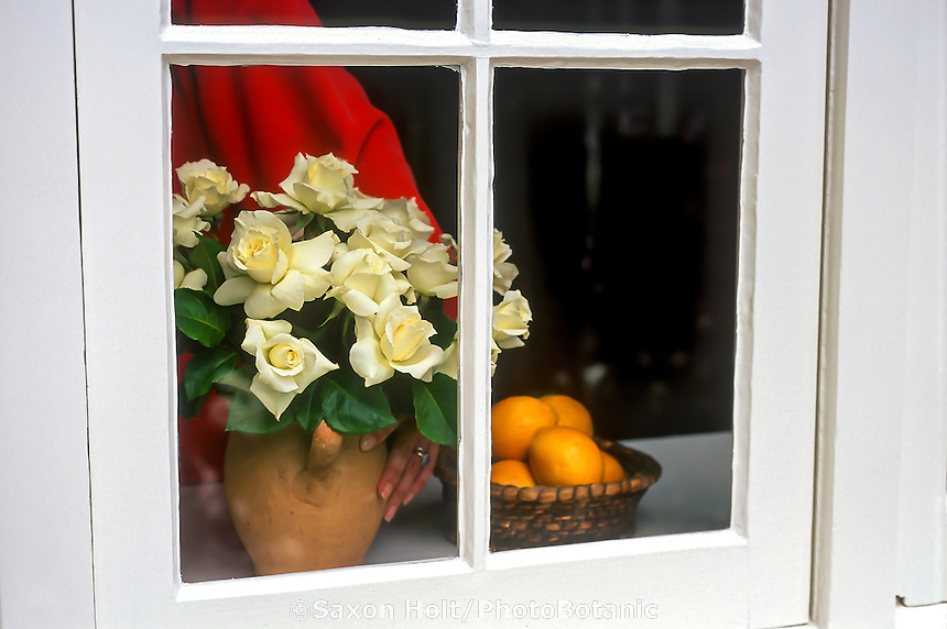 Woman in red sweater placing bouquet of white hybrid tea cut rose 'Pascali' by windowsill