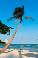 Palm Tree With Swing, Bai Sao Beach, Phu Quoc, Vietnam