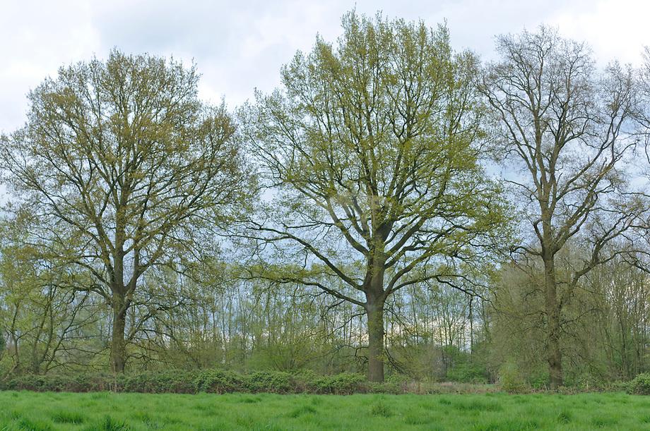 Landgoed de Blauwe kamer, Brabants Landschap
