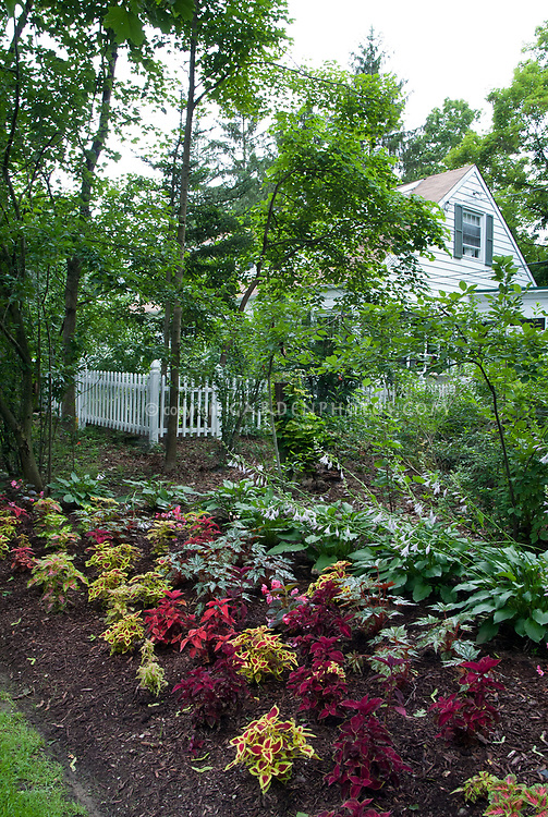 Wood Chip Mulched Coleus Garden Under Trees Plant Flower Stock