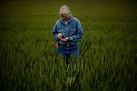 Wellsville, Kansas, May 28, 2011 - A portrait of fourth generation family farmer Robin Dunn in a field of winter wheat at her farm, Dunn's Landing...Dunn bought her great grandparents homestead from her father in 1993, and today grows soybeans, corn, sorghum and hay, and maintains a small herd of Black Angus cattle and eight horses which she uses to for wagon and stage coach rides.  According to the most recent Department of Agriculture data, there are more than 306,000 farms run primarily by women in 2007, representing about 14 percent out of the 3.3 million American farms.  That's up from 237,819 or 11 percent in 2002, and a big increase from the 1980s when about five percent of U.S. farms were operated by women.Dunn has branched out from her farming business, using her century-old dairy barn to host 25 to 30 weddings and other events a year. She also attracts tourists for farm tours and carriage rides, and holds sessions with school children to teach them about faming.