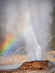 Pink Cone Geyser erupts with a rainbow in the background.