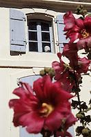 Europe/France/Poitou-Charentes/17/Charente-Maritime/Talmont: Détail fenetre d'une vieille maison et roses trémières