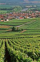 Europe/France/Champagne-Ardenne/51/Marne/Cumières: le village et le vignoble champenois dans la la vallée de la Marne