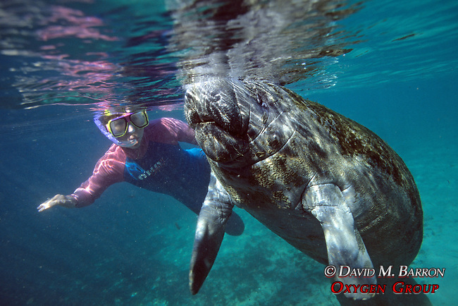 Jessica Koelsch With Manatee