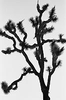 Joshua Tree, Joshua Tree NP, Film