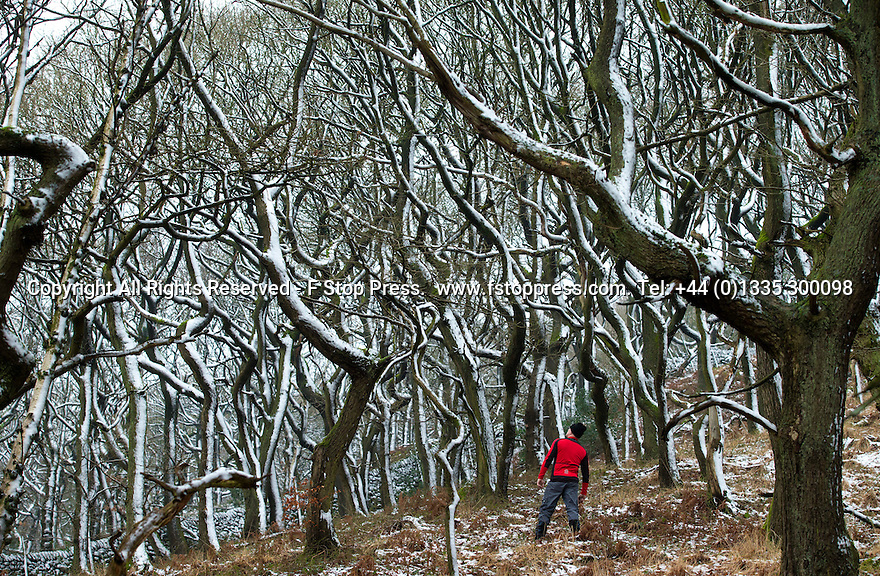 29/12/14<br /> <br /> After the lowest overnight temperatures recorded this winter, a walker stops to admire a stunning frozen woodland near Hayfield in the Derbyshire Peak District.<br /> <br /> <br /> All Rights Reserved - F Stop Press. www.fstoppress.com. Tel: +44 (0)1335 300098