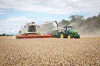 Harvesting winter wheat - Lincolnshire, August