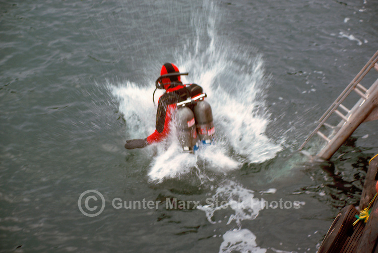 Scuba Diver wearing Oxygen Tanks / Diving Cylinders jumping into Pacific Ocean, along the West Coast near Vancouver, BC, British Columbia, Canada