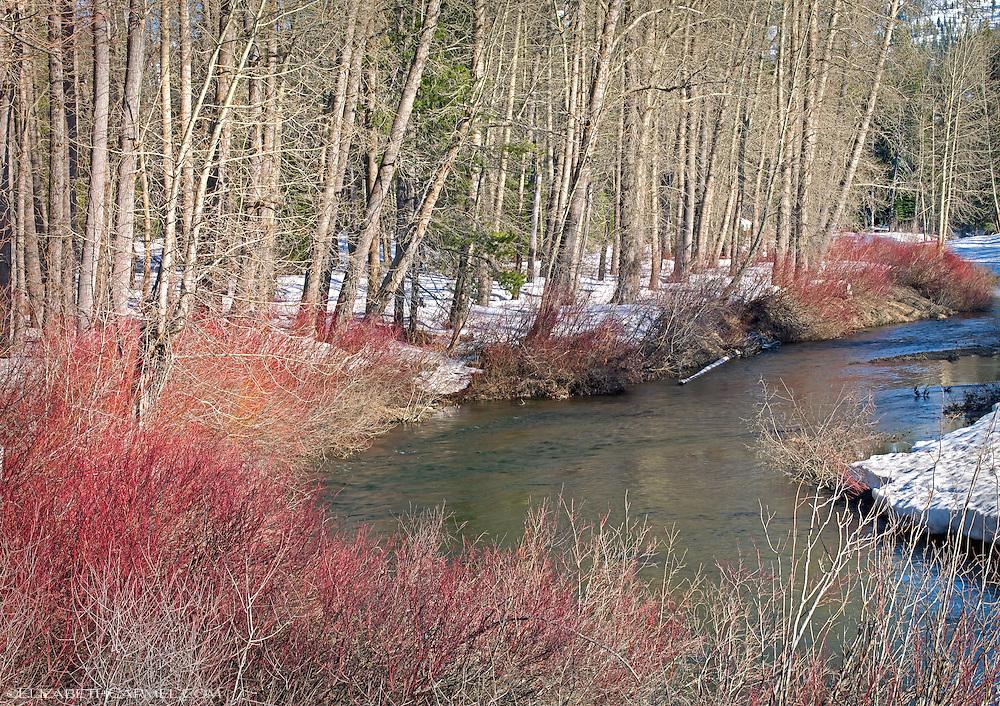 Yuba River in Winter