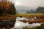Rainy Marsh In Autumn, Adirondack Mountains, New York