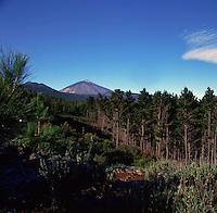 Mount Teide and pine forest, Parque nacional Cañadas,Tenerife,Canary Islands,Spain