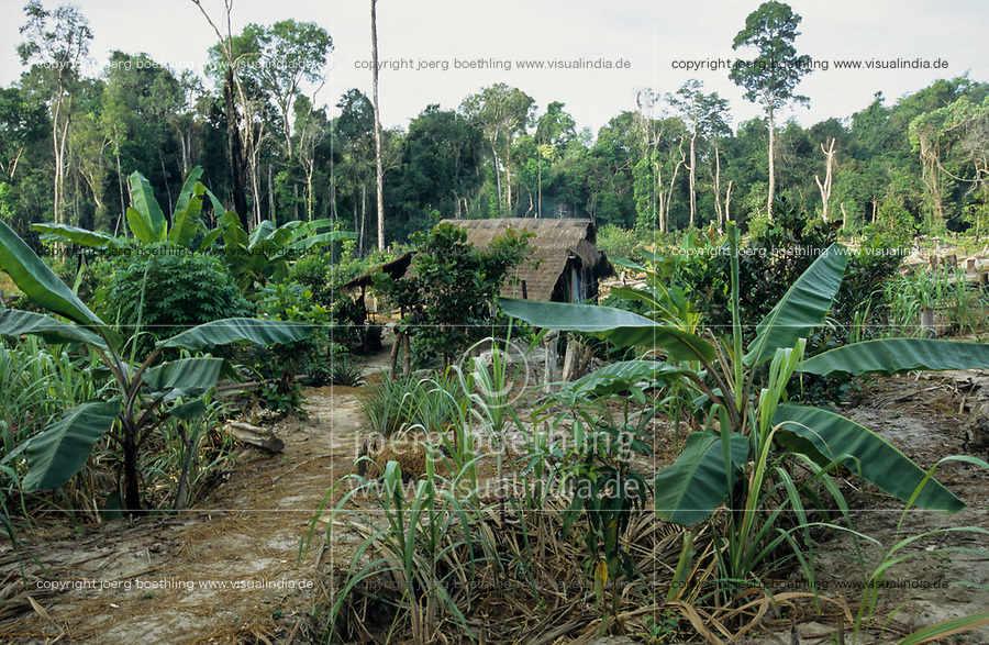 CAMBODIA, Mekong region, Stung Treng, logging of rainforest, cleared and burned forest, poor people settle on deforested plots and start farming