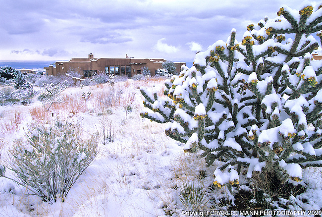 A cholla cactus provides a dramatic frame for a snowy scene during a winter snowfall  in Santa Fe, New Meixo