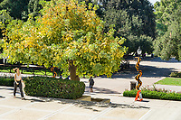 (Photo by Don Milici, Freelance Photographer)<br /> <br /> As part of Occidental College's Homecoming & Family Weekend, photo of members of the Oxy community exploring the campus, Friday, Oct. 18, 2019.<br /> <br /> (Photo by Don Milici, Freelance Photographer)