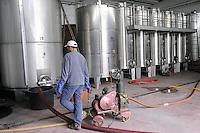 """- """"Marasi"""" winery  in the province of Piacenza....- azienda agricola vitivinicola """"Marasi"""" in provincia di Piacenza"""