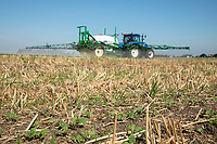 Spraying insecticide for cabbage stem flea beetle - Lincolnshire, September