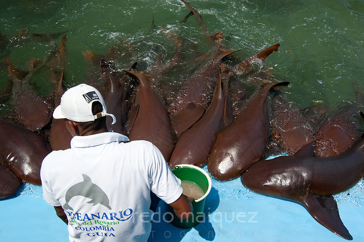 Nurse Shark show (Ginglymostoma cirratum) Oceanarium, San Martin de Pajarales island, Rosario islands, Cartagena de Indias, Colombia, South America. 2009