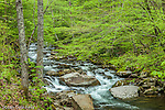 The Oconaluftee River, Great Smoky Mountains National Park, North Carolina, USA