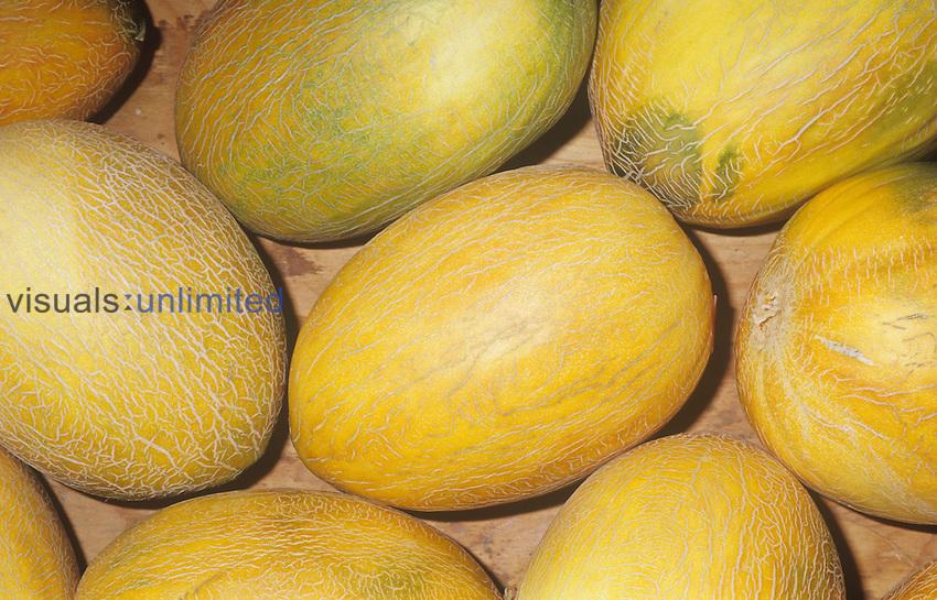 Melon variety Sharlyn (Cucumis melo)