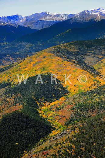 Aspen near Colorado and New Mexico border. Sangre de Cristo mountains.