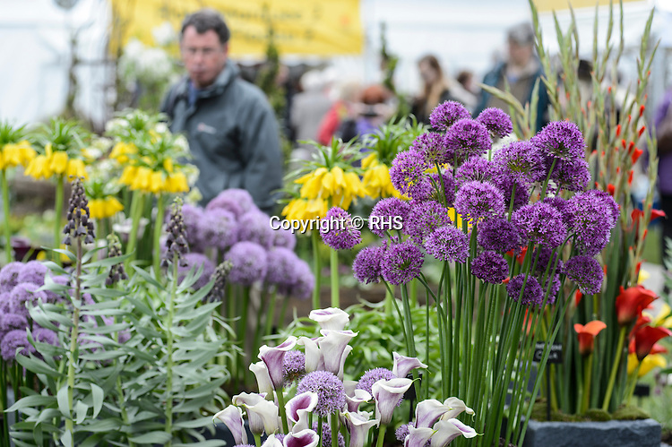 People shopping for plants the RHS Show Cardiff 2016.