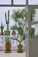 A view through the French windows of the living room to the balcony beyond which houses an impressive collection of cacti and succulents