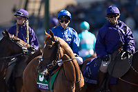 DEL MAR, CA - NOVEMBER 04: Wuheida #5, ridden by William Buick, takes the track for the Breeders' Cup Filly & Mare Turf on Day 2 of the 2017 Breeders' Cup World Championships at Del Mar Thoroughbred Club on November 4, 2017 in Del Mar, California. (Photo by Alex Evers/Eclipse Sportswire/Breeders Cup)