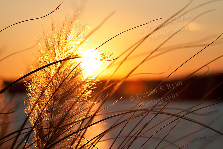 Pampas Grass sunset on Lake Wylie South Carolina Winter