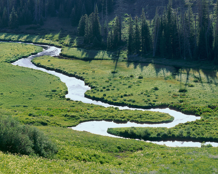 Morning light on the Bear River in the Flat Tops Wilderness; Routt National Forest, CO
