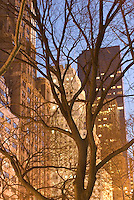 THIS IMAGE IS AVAILABLE EXCLUSIVELY FROM GETTY IMAGES.....PLEASE SEARCH FOR IMAGE #200535101-001 ON WWW.GETTYIMAGES.COM..... Trees in Central Park and Buildings on Fifth Avenue Illuminated at Dusk, New York City, New York State, USA
